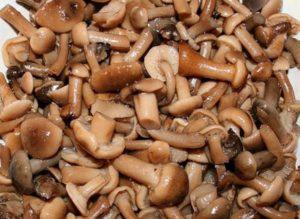грибы опята стоимость